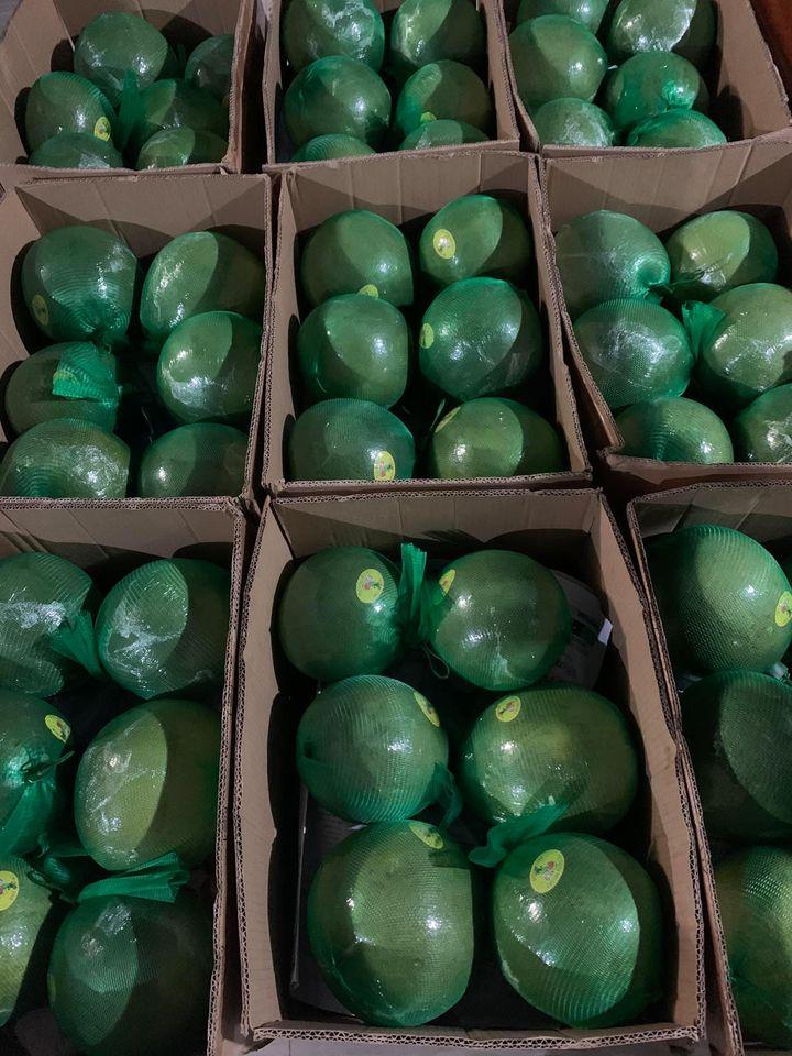 Bưởi da xanh giảm giá còn 30.000 đồng/kg vẫn ế sưng - Ảnh 2.