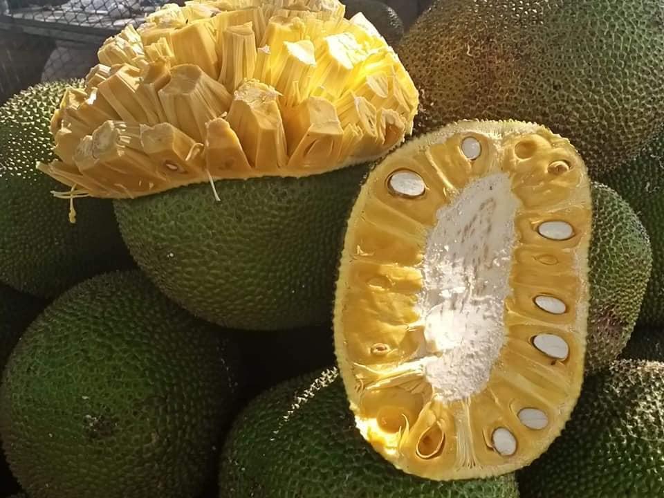 Mít Thái giảm giá vì ngừng xuất khẩu, người trồng khóc vì chỉ đủ tiền phân bón - Ảnh 3.