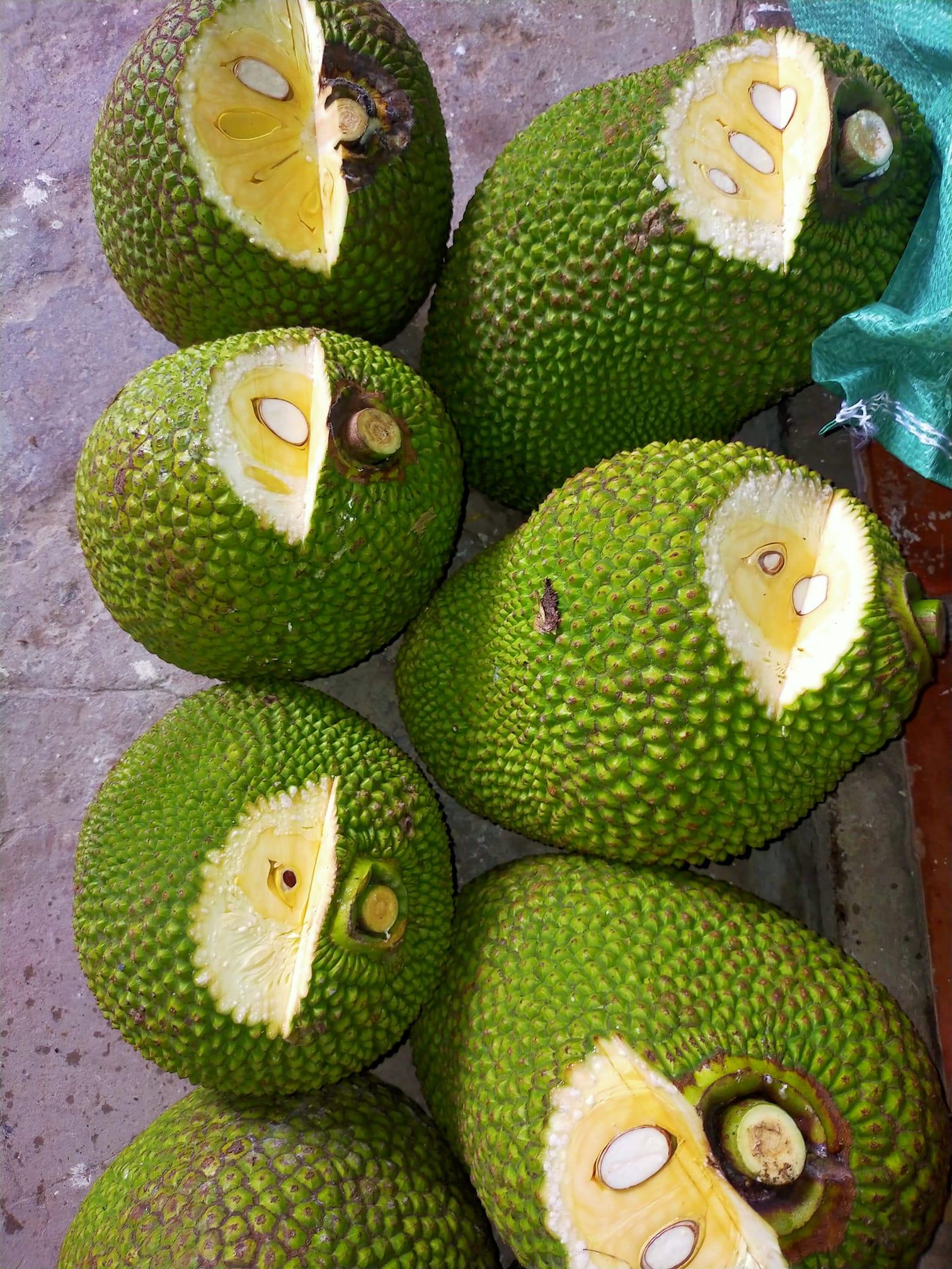 Mít Thái giảm giá vì ngừng xuất khẩu, người trồng khóc vì chỉ đủ tiền phân bón - Ảnh 4.