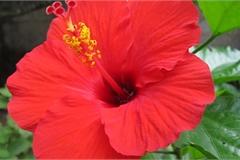 5 loại hoa đẹp đến mấy gia chủ cũng không nên đem vào nhà