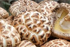 Nấm hương Nhật hơn 8 triệu đồng/kg, dân Hà Nội mua về xào rau, nấu canh ăn hằng ngày