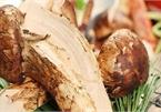 Mùa Vu Lan, nhà giàu săn nấm ăn chay có mức giá mà nhà nghèo không dám nghĩ đến