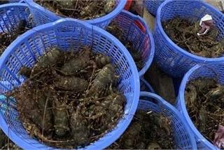 Hải sản về Hà Nội với giá rẻ chưa từng có, người dân 'tranh thủ' ăn 'sang'
