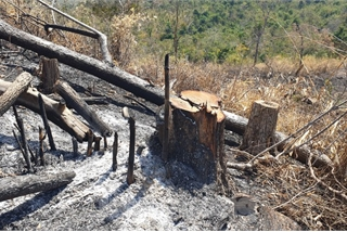 Protective forest destroyed in Dak Lak