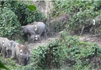 Herd of elephants spotted in Quang Nam forest
