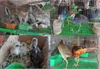 90% of respondents surveyed in Vietnam support closure of illegal wildlife market