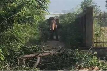 Mahout dies in elephant attack in Dak Lak