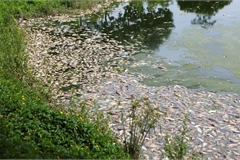 Fish die en masse in Hanoi lake