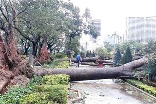 Storm Matmo ravages central Vietnam