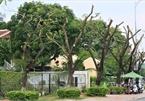 Da Nang trees trimmed during storm season