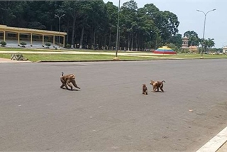 150 monkeys at Tay Ninh holy see proposed to be released