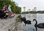 Hanoi plans to open another pedestrian street
