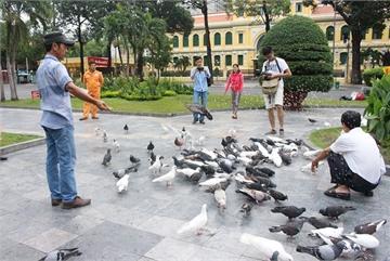 Hanoi considers releasing doves around Hoan Kiem