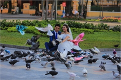 More pigeons living around Saigon's Notre-Dame Cathedral