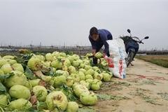 Pandemic turns Hai Duong farm produce into waste