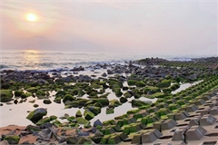 Visitors flock to green moss sea dyke in Phu Yen