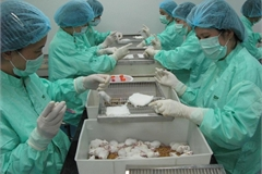 Vietnamese Covid-19 vaccine test on mice shows positive signs