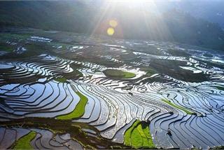 Stunning terraced fields in Sapa