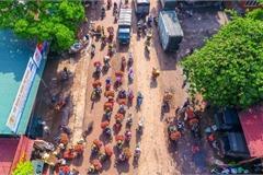 Lychee harvest season in Bac Giang