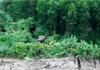 Two wild elephants spotted in Quang Nam forest