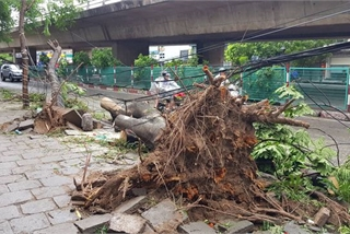 Trees uprooted as storm Mun ravages Haiphong