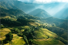 Breath-taking beauty of Sapa's ripening paddy fields