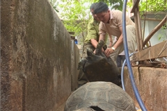 Man prosecuted for keeping large number of rare tortoises