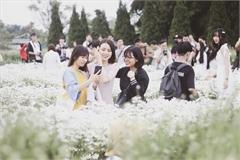 Hanoians flock to daisy garden for photos