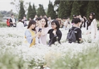 Hanoians flock to daisy garden for photos