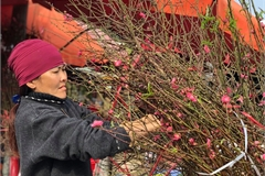Peach flower blossoms see good sales for the new year