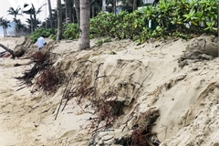 Da Nang beaches continue to face erosion