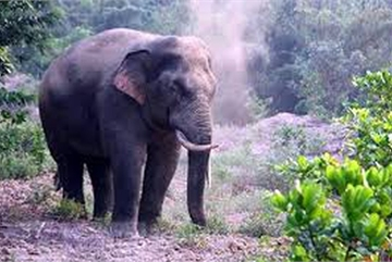 Villagers supported after elephant rampage