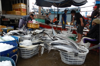 Da Nang fishermen celebrate big post-storm catches