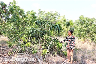 Dong Nai villagers threatened by elephant rampages