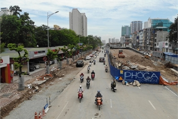 Security tightened over valuable dalbergia tonkinensis trees in Hanoi