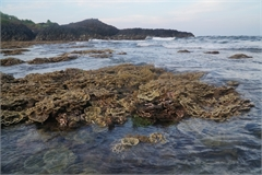 Quang Ngai: Near-shore coral reef threatened by tourism activities