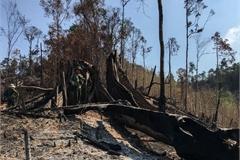 Dak Lak deforestation investigated