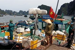 Ha Long Bay overloaded with rubbish