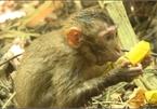 Dozens of animals released into the wild