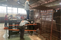 Caged bears rescued in Binh Duong