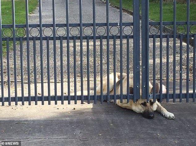 Cảm thương chú chó ngóng chờ người chủ đã qua đời - 1