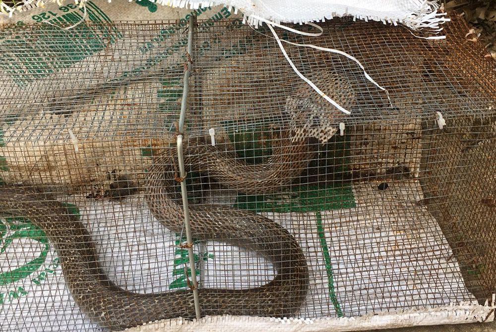Sự thật rắn độc bủa vây toà chung cư mới ở Hà Nội - 2