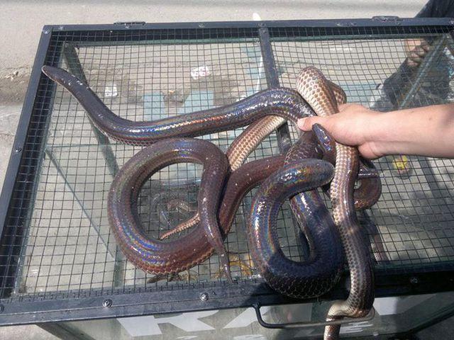 """Hết hồn với 4 món ăn được chế biến từ rắn, vừa ăn vừa """"dựng tóc gáy"""" - 2"""