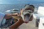 Sốc khi bắt được con cá sở hữu tới 2 cái miệng