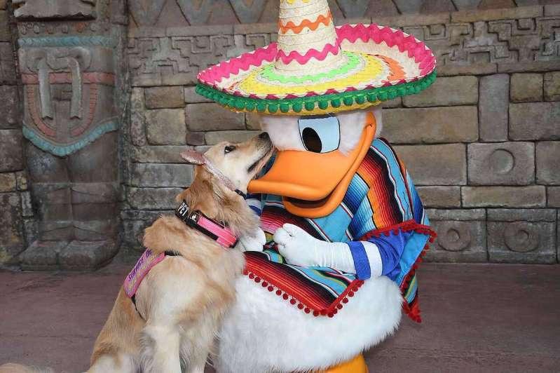 Ngộ nghĩnh tình yêu của chú chó Nala với vịt Donald - 3