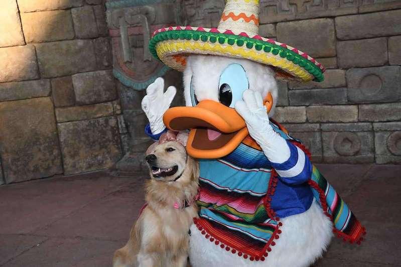 Ngộ nghĩnh tình yêu của chú chó Nala với vịt Donald - 1