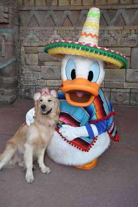Ngộ nghĩnh tình yêu của chú chó Nala với vịt Donald - 2