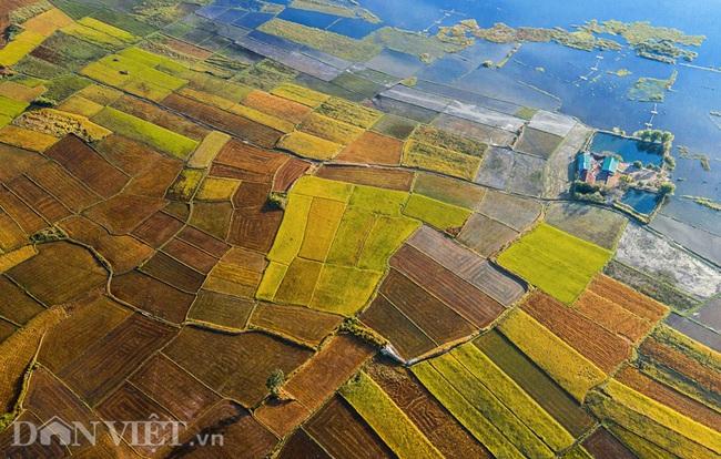 Chiêm ngưỡng cánh đồng lúa đẹp nhất nhì Tây Nguyên từ trên cao - 1