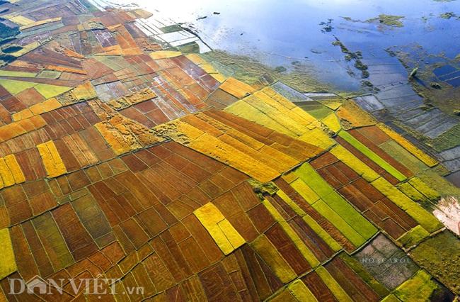 Chiêm ngưỡng cánh đồng lúa đẹp nhất nhì Tây Nguyên từ trên cao - 6