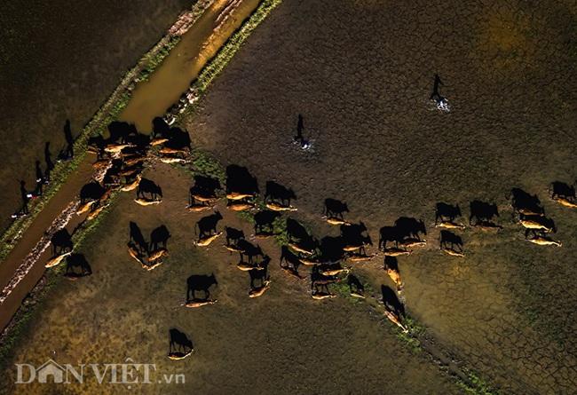 Chiêm ngưỡng cánh đồng lúa đẹp nhất nhì Tây Nguyên từ trên cao - 8